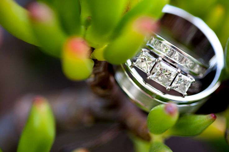 Ring set in succulents, Caloundra wedding. www.lanicarter.com