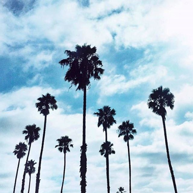 HELLO AUGUST! Pause and take a moment to observe the life in front of you.  .  .  .  .  .  .  #relax #inspire #breathe #palms #bluesky #clouds #healthyliving #meditate #aesthetic #palmtrees #California #sunshine #naturalskincare #latherup #health #beauty #wellness