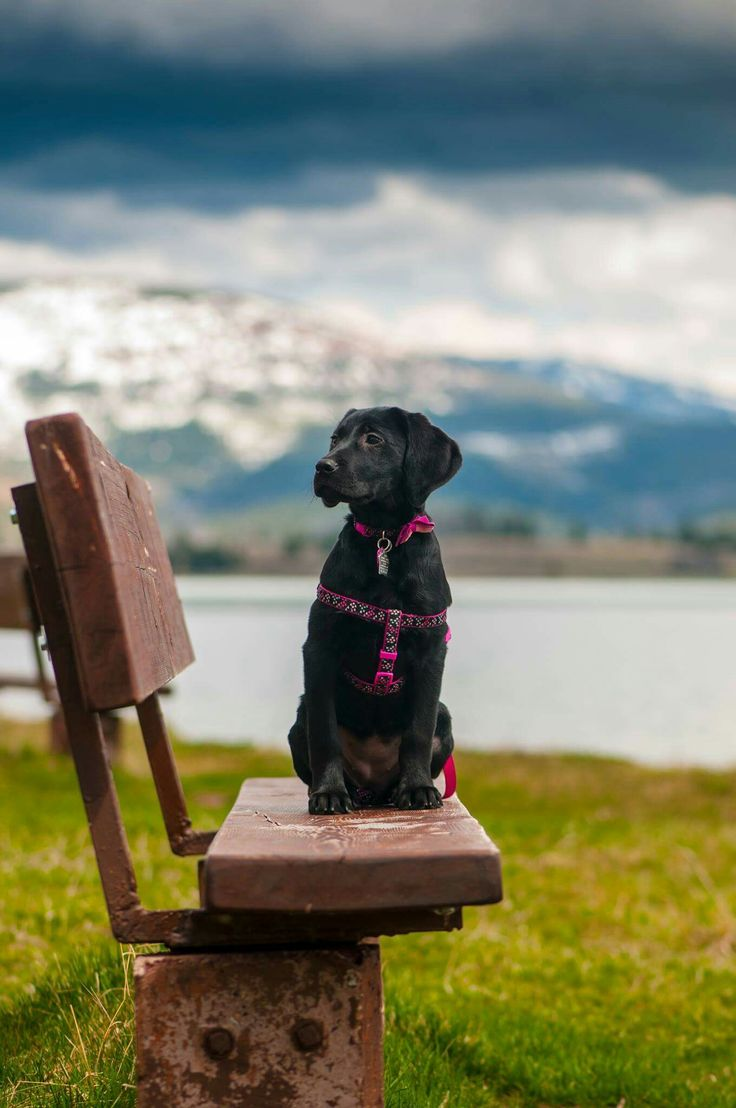 At Georgetown lake, MT. Our cute puppy Luna being photogenic as always!