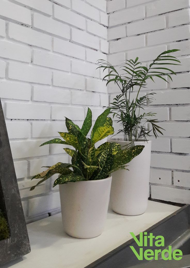 Plants improve air quality and increase #happiness and #productivity in your #office space. And on top of that, they look great! #officelife