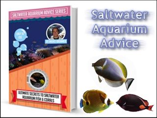 """Saltwater Aquarium Advice. One of the most downloaded saltwater aquarium information products on the internet… now updated for 2014. """"Discover Scientist's Saltwater Aquarium Secrets To Thriving Aquariums! Never Make Fatal and Expensive Marine Aquarium Mistakes Again… """""""