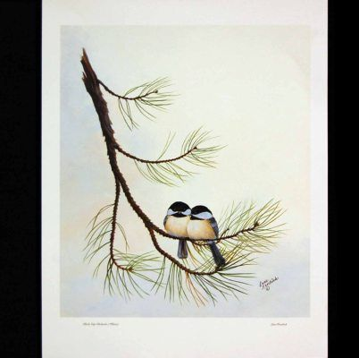 potential idea for chickadee tattoo | Someday when I am ...