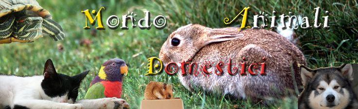 il logo del mag online, animali domestici, cani, gatti, canarini, conigli, criceti e altro... rivista online dei vostri amici animali