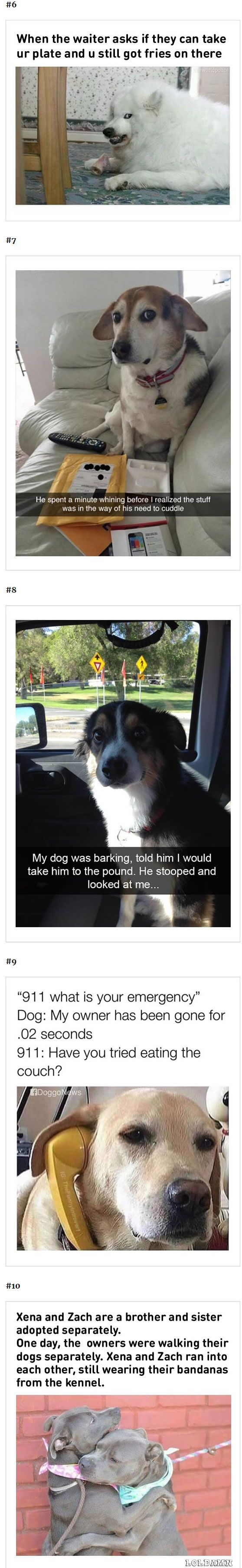 Best Hilarious Animal Memes Ideas On Pinterest Hilarious - 10 hilarious conversations dogs have dial 911