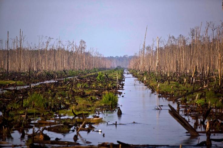 Deforestation in Sumatra