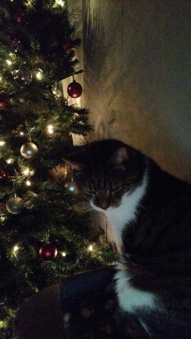 Christmas cat Muppet