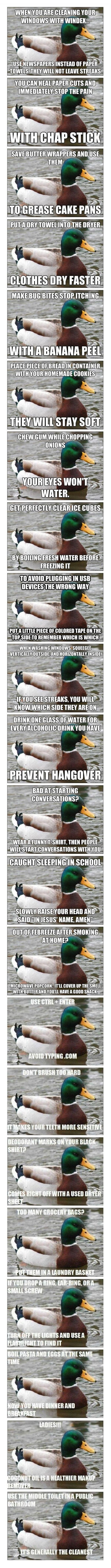 Useful tips from helpful duck