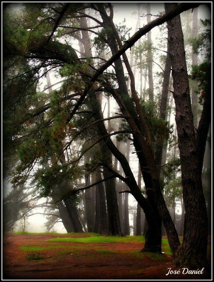 Bosque cerro la virgen