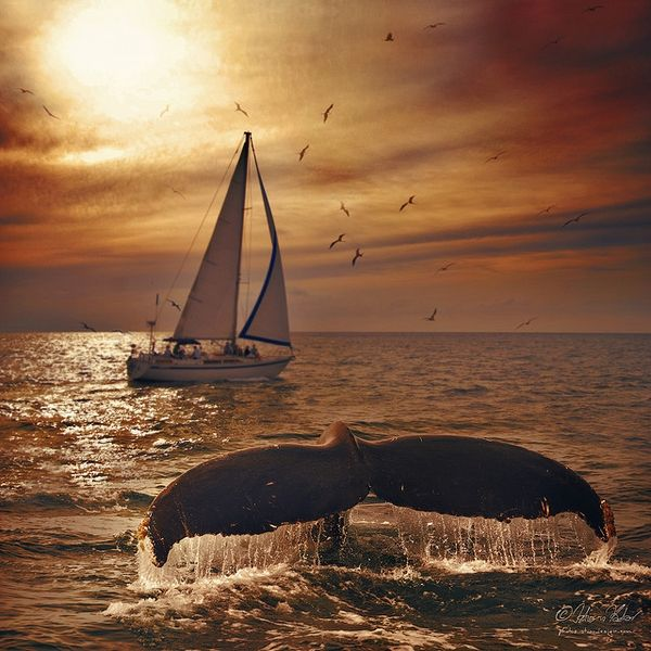 how gorgeous is this sunset with whale AND a sailboat!? wow!