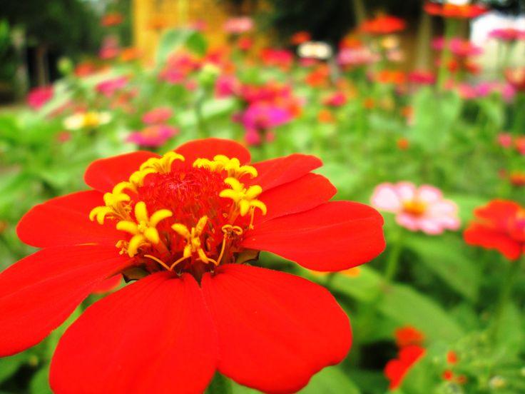 Jardines y flores en PANACA