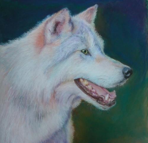 Wolf - WetCanvas