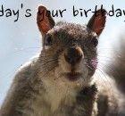 funny-Happy-birthday-pics-images