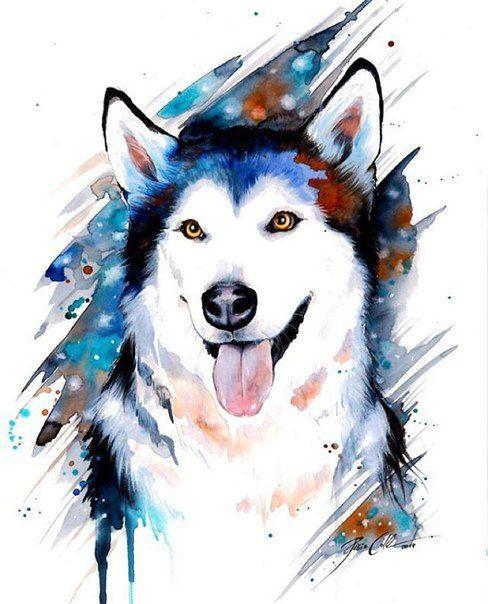 Mejores 9 imágenes de Siberian Husky Drawing en Pinterest | Huskies ...