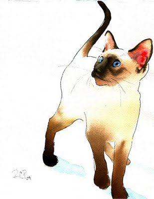 "Rachel's Studio Blog: Siamese Cat watercolor ""Habib"""