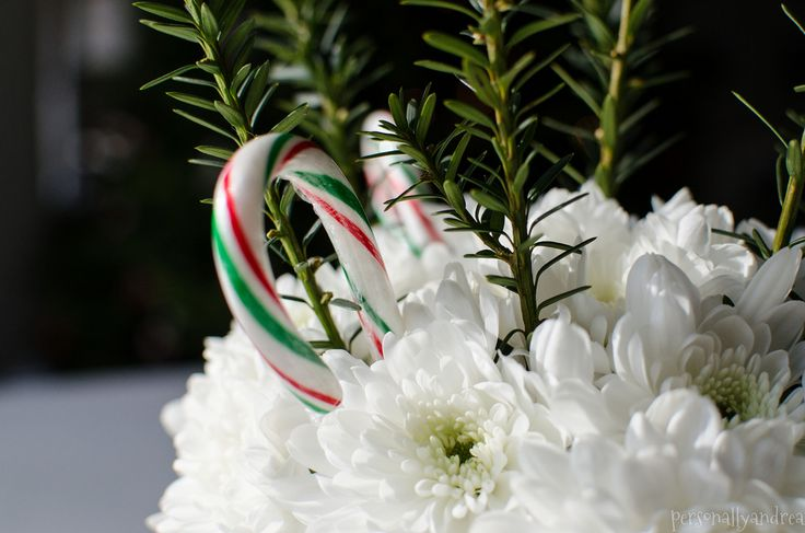 Beautiful Christmas floral arrangement with Axima White, Chrysanthemums, candy canes and evergreen in a mug | PersonallyAndrea Blog - it inspires me to do my own, with rosemary and yellow Chrysanthemums. (Don't have white in the garden).