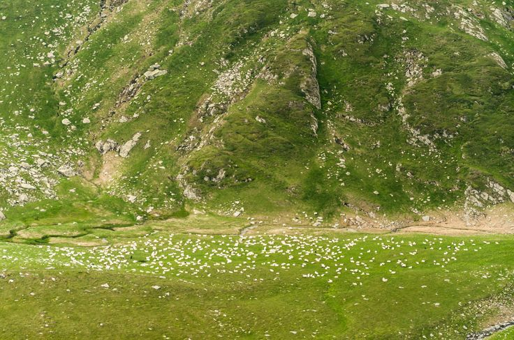 Sheep by Marcel Ilie on 500px