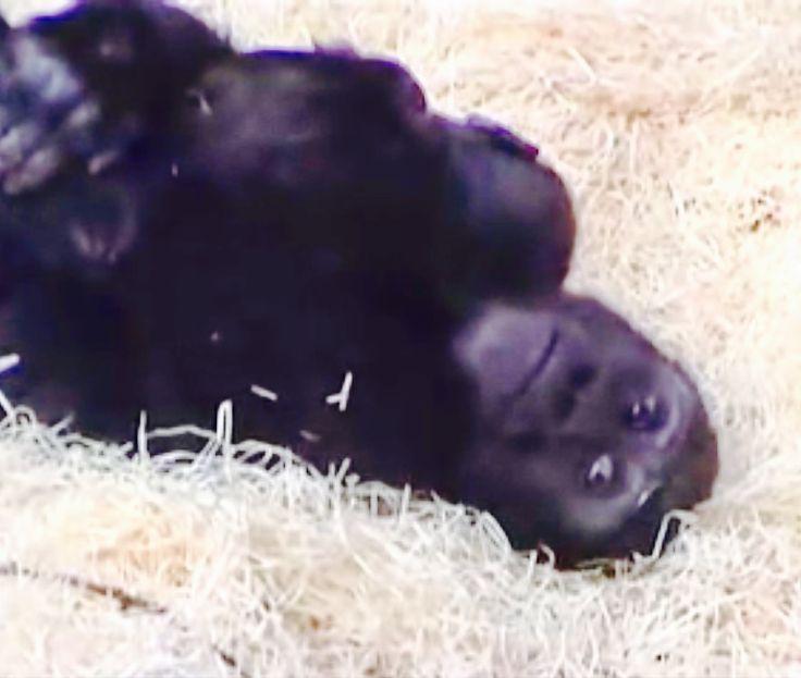 Tatu hugging baby brother Kiburi while he sleeps. So cute!!!