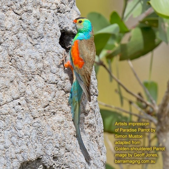 Image result for hawk head parrot wings   Parrot, Parrot