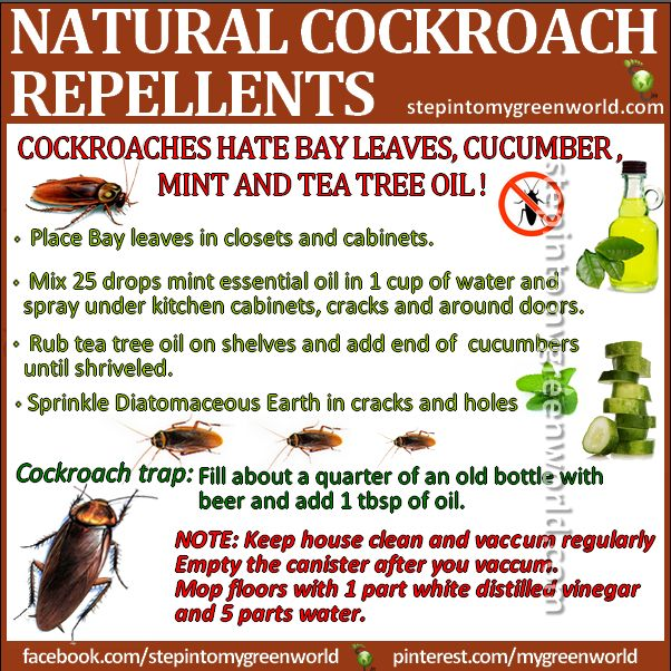 ☛ BY POPULAR DEMAND: Aggressive cockroach repellents.  Did you know? Cockroach can live up to 1 full year in your home if you don't get rid of them!  FOR ALL THE DETAILS AND TIPS:  http://www.stepintomygreenworld.com/helathyliving/around-the-home/aggressive-cockroach-repellents/  ✒ Share | Like | Re-pin | Comment
