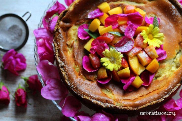 *recipe and photo by Sari Mattsson*    Glutenfree Rhubarb cheesecake