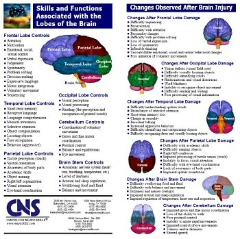 lobes and their functions | Brain Lobes and Function