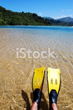 Snorkelling in the Abel Tasman Royalty Free Stock Photo