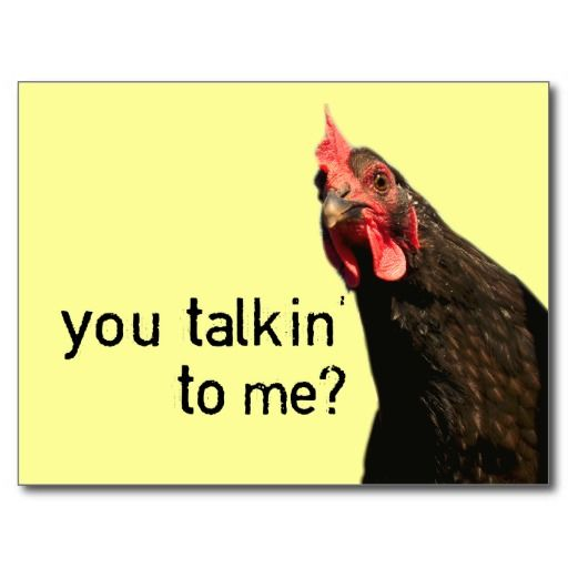 Funny Attitude | Funny Attitude Chicken - you talkin to me? Postcard