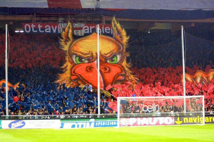 Grifone Gradinata Nord. Griffin nord sector. L.  Ferraris stadium.  Genoa's supporters