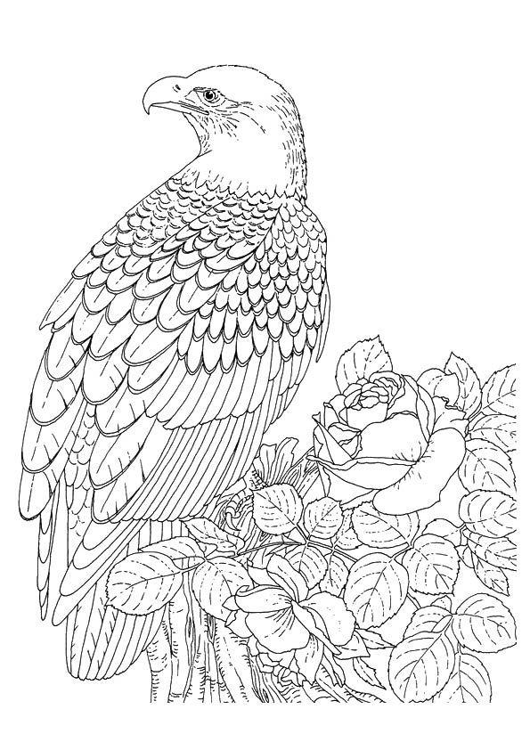 Print Coloring Image Momjunction Bird Coloring Pages Coloring Pictures Coloring Pages