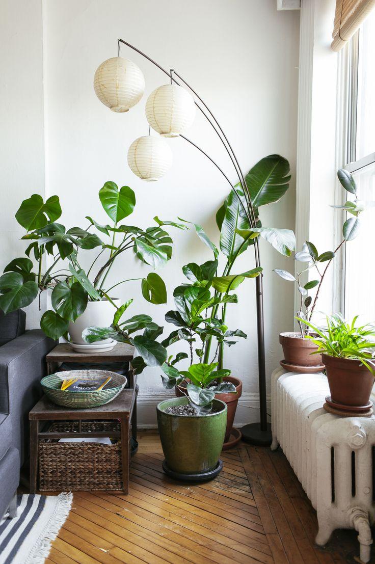 41 Best Leaf And June Interior Plant Design Images On Pinterest Indoor House Plants Indoor