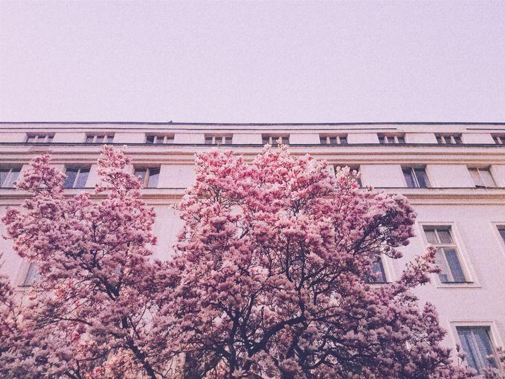 Pink #Spring at Vojanovy Sady #Prague | ferlavins | VSCO Grid