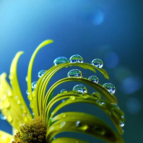 Dew drops follow http://pinterest.com/ahaishopping/