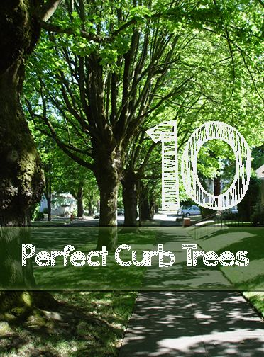 10 Perfect Curb Trees for Your Yard.