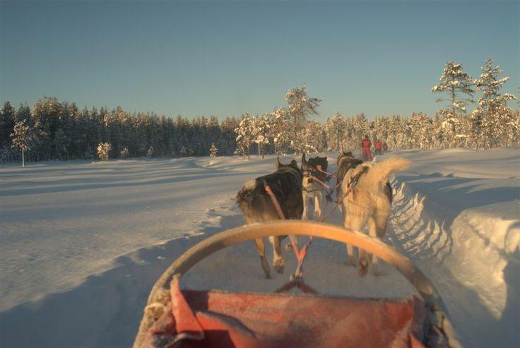 3 hour dog sledding tour 180,- € per person