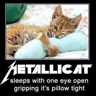 Image result for heavy metal memes