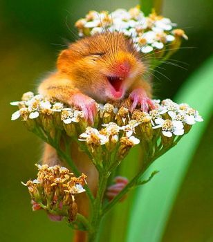 A Happy Mouse