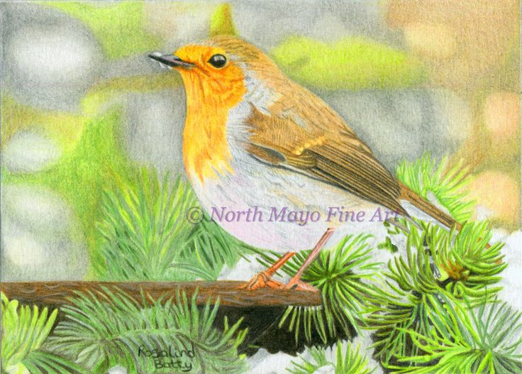 'Christmas Robin' was drawn to be made into Christmas cards