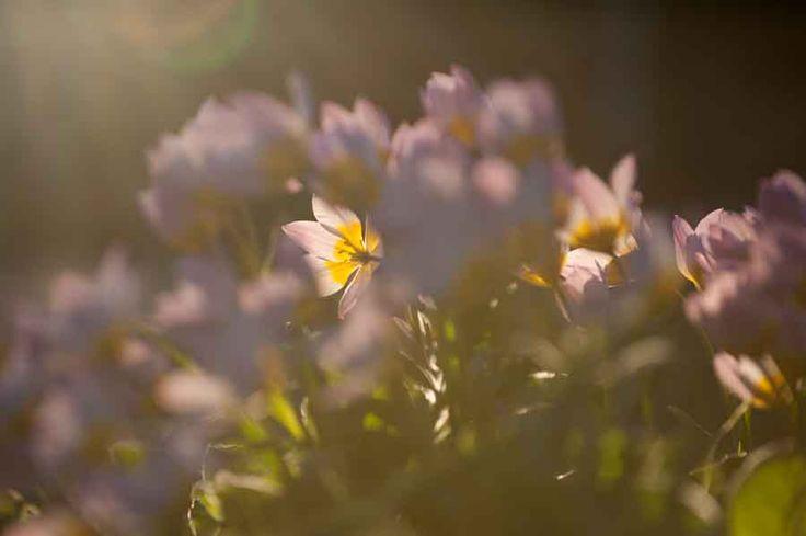 Flowers soaking up the last rays of sunshine. Image©K Woodland/K Woodland Photography.