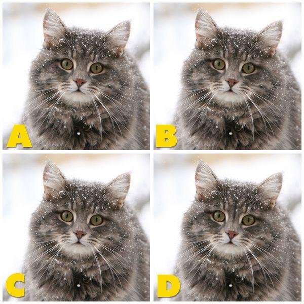 Quiz Diva Spot The Different Kitty