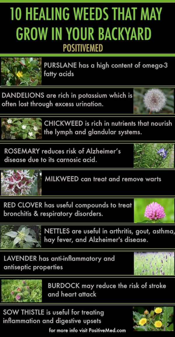 10 Healing Weeds That May Grow In your Backyard - Herb benefits