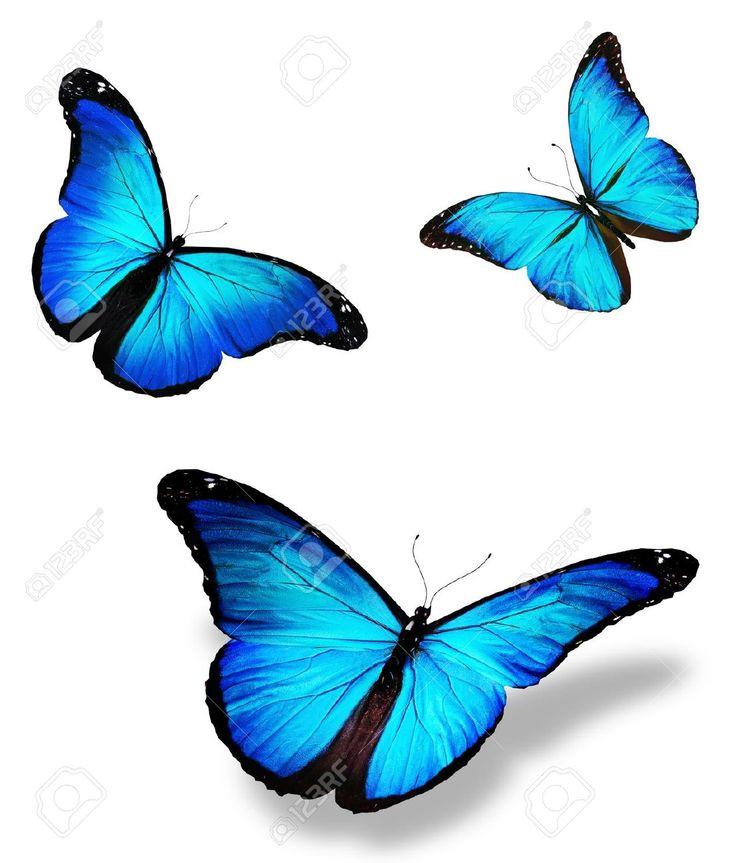 Tre Farfalla Blu Foto Royalty Free, Immagini, Immagini E Archivi Fotografici. Image 14424011.