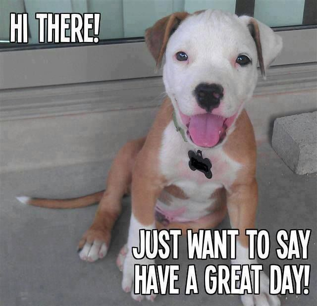 caa8a193342c2c45367b3e0c5f4ccdaa have a great day pitt bulls 39 best good morning images on pinterest funny animals, funny,Cute Have A Good Day Memes