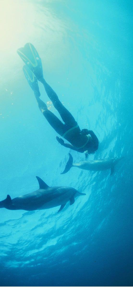 【H.I.S.】イルカと泳いだことありますか?ハワイでは夢のような体験がたくさん待っています。