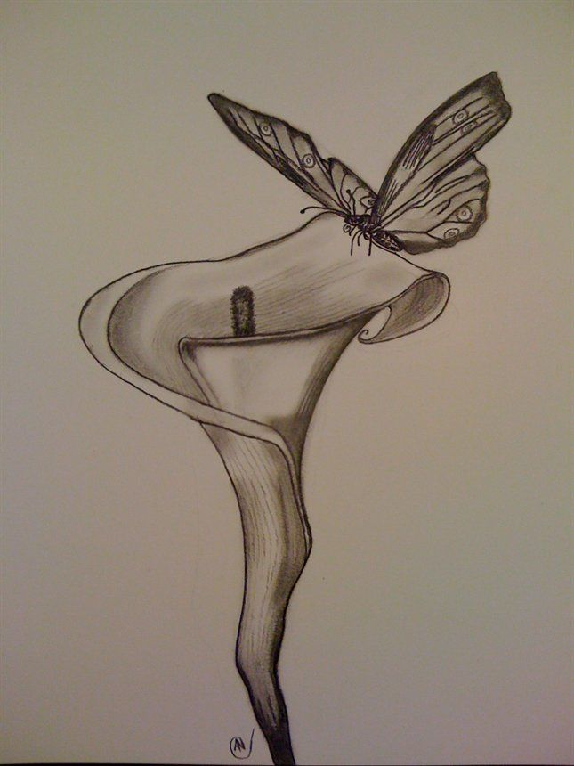 Drawings of flowers and butterflies pencil drawings of flowers and butterflies this is kinda