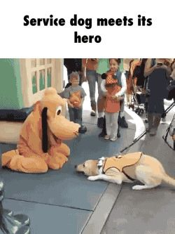Service dog meets its hero