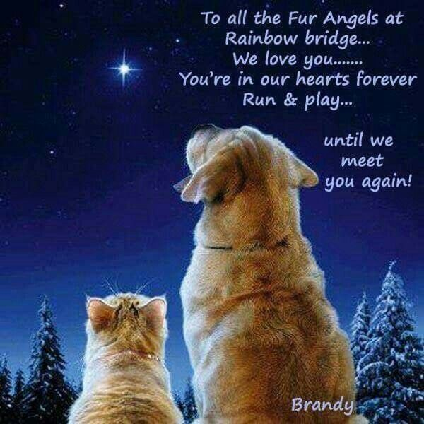 I will see you again my friend......