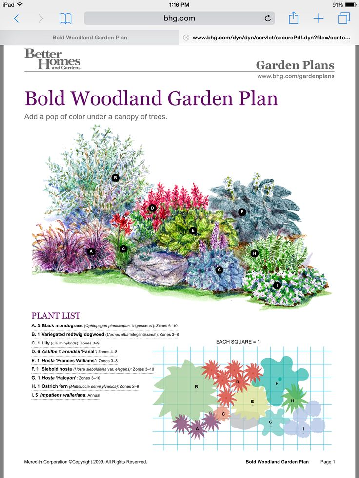 Large Perennial Garden Plan