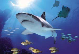 40% off All Birmingham Aquarium tickets  VIEW DEAL http://www.vouchertree.co.uk/discounts/new/33/?modal=398876