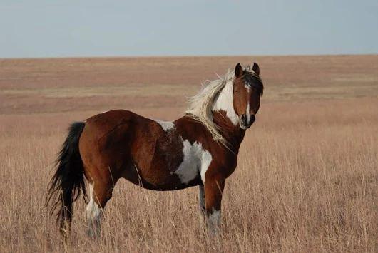 Curso Conexión del Alma Animal. Mallorca, honrando al hermano caballo, 1/2 oct