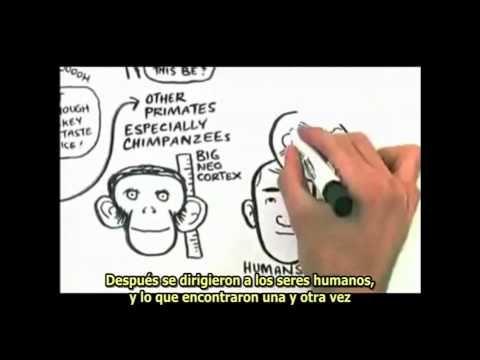 Neuronas espejo. Nuevas formas de mirar al cerebro. Prof. Jeremy Rifkin presenta los resultados de un hallazgo casual en el estudio del cerebro humano y que ha revolucionado la concepción que teníamos acerca del aprendizaje social y la enseñanza de determinado tipo de competencias, como la autonomía y la iniciativa personal o la competencia social y ciudadana.